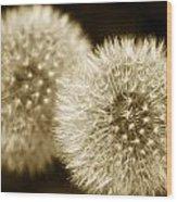 Sepia Dandelions Wood Print