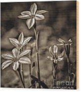 Sepia Dreams Wood Print