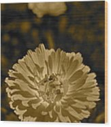 Sepia Flowers Wood Print
