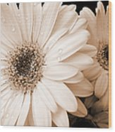 Sepia Gerber Daisy Flowers Wood Print by Jennie Marie Schell