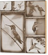 Sepia Hummingbird Collage Wood Print