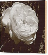 Sepia Rose Wood Print