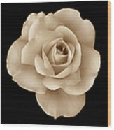 Sepia Rose Flower Portrait Wood Print