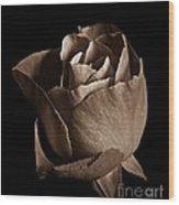 Sepia Rose Portrait 2 Wood Print