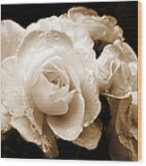 Sepia Roses With Rain Drops Wood Print by Jennie Marie Schell