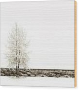 Sepia Square Diptych Tree 12-7693 Set 2 Of 2 Wood Print