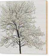 Sepia Square Tree Wood Print