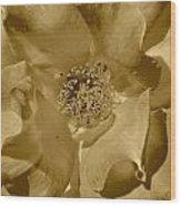 Sepia Toned Rose Close Up Wood Print