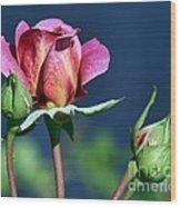 September Rose Wood Print