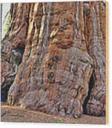 Sequoia Tree Base Wood Print