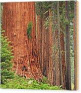 Sequoias Wood Print by Inge Johnsson