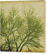 Serene Green 2 Wood Print