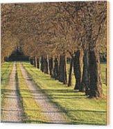 Serene Lane Wood Print