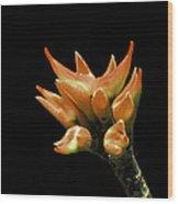 Serene - Unruffled Wood Print