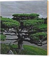 Serenity And Balance Wood Print