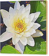 Serenity In White - Water Lily Wood Print
