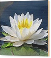 Serenity On The Lily Pond Wood Print