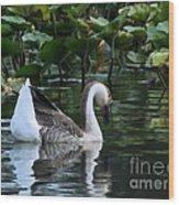 Serenity Swim Wood Print