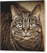 Serious Tabby Cat Wood Print