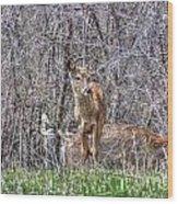 Sertoma Park Deer Wood Print