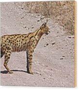 Serval Cat Wood Print