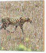Serval Cat - Kenya Wood Print