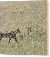 Serval Hunting Wood Print