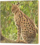 Serval Leptailurus Serval Wood Print