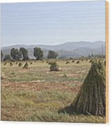 Sesame Crop And Harvest Wood Print