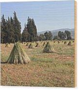 Sesame Harvest Wood Print