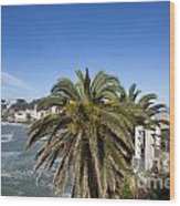 Sestri Levante And Palm Tree Wood Print