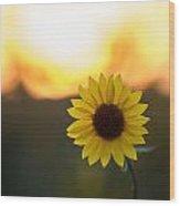 Setting Sun Flower Wood Print