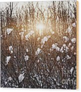 Setting Sun In Winter Forest Wood Print