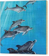 Seven Dolphins Wood Print