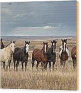 Seven Horses On The Range Wood Print