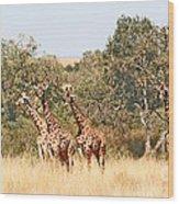 Seven Masai Giraffes Wood Print