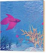 Several Red Betta Fish Swimming Wood Print