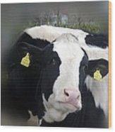 Sexy Cow Wood Print