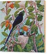 Seychelles Paradise Flycatcher Wood Print