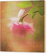 Shabby Chic Rose Print Wood Print
