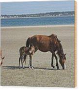Shackleford Banks Foal Wood Print