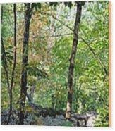 Shade Upon A Rock Wood Print