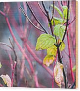 Shades Of Autumn - Reds And Greens Wood Print