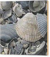 Shades Of Blue Shells Wood Print