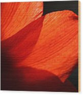 Shades Of Red Wood Print