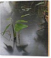 Shadow Mirror Reflection Wood Print