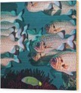 Shadowfin Soldierfish Wood Print
