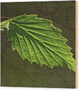 Shadows And Light Of The Leaf Wood Print