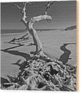Shadows At Driftwood Beach Wood Print