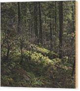 Shadows Of Color Wood Print